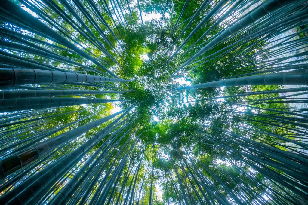 【鎌倉さんぽ】青々とした竹林を撮影に。「報国寺」を中心に鎌倉周辺を散策(55mm F1.8 ZA SEL55F18Z)