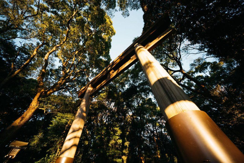 朝明けの澄んだ空気、都心で森林浴をする贅沢。|Leica M10 と明治神宮さんぽ